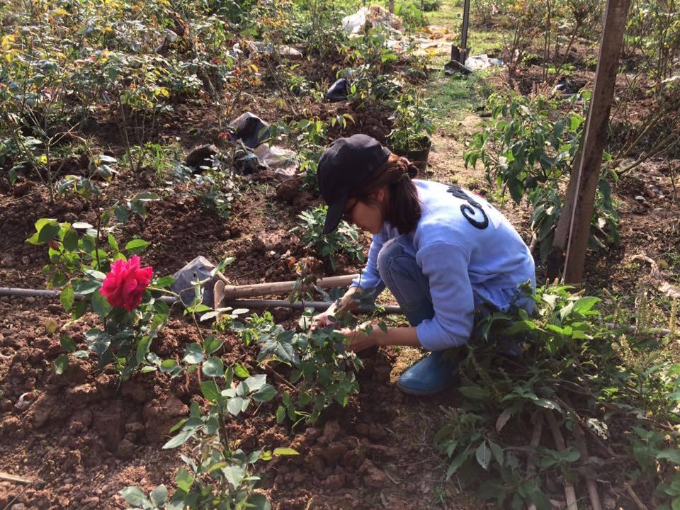 Một góc vườn ươm hoa hồng