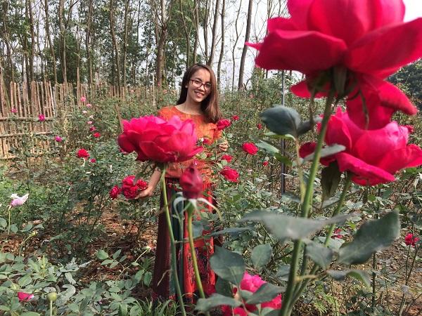 Vườn hoa hồng mùa xuân nở đẹp nhất (tấm hình chụp ngày 28 tết)