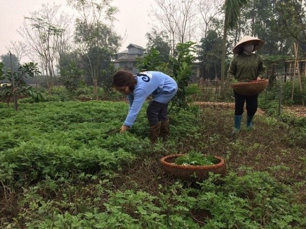 Vườn trồng nguyên liệu của Út Em