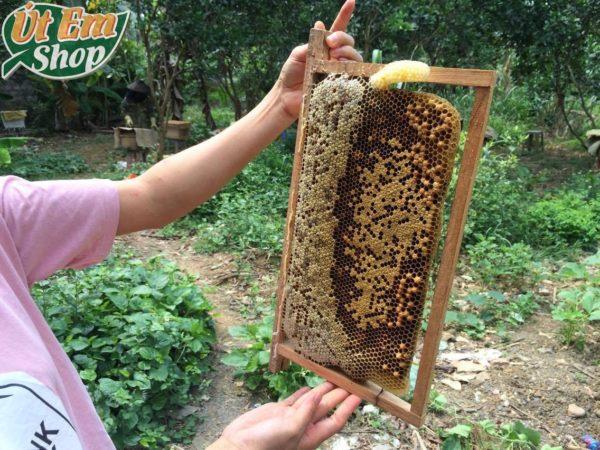 Thật không may Út Em bị ong đốt
