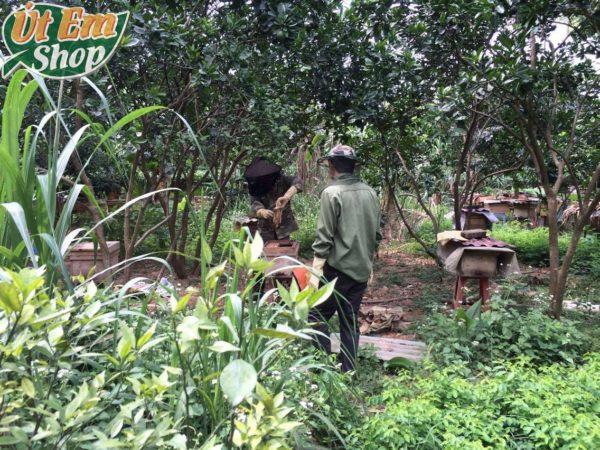 Chú Phong và thợ ong đang lấy sáp ra khỏi tổ ong