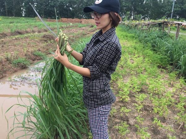 Vườn sả chanh Út Em, sả được trồng hai bên luống rau ăn