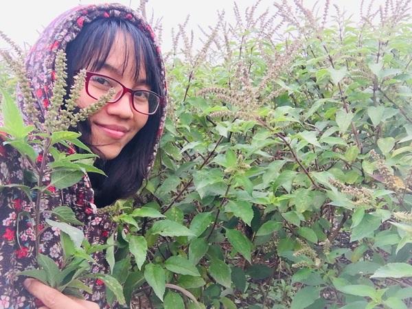 Vườn hương nhu út em